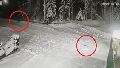 A cadela Jessie, avistou o perigo e correu rapidamente para salvar Yemelyan do lobo. (Foto: Social Media)