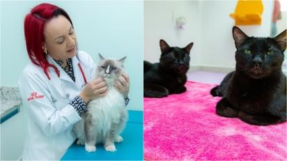 Verão e gatos: uma combinação que exige cuidados especiais. (Foto: JF Gestão de Conteúdo)