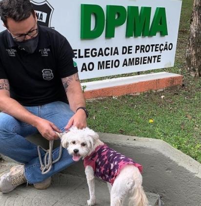 A cadelinha foi resgatada e ficará sobre os cuidados da ONG S.O.S 4 patas Paraná. (Foto: Instagram/delegado.matheuslaiola)