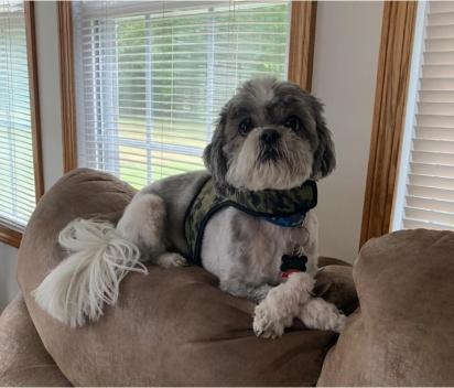 O cachorrinho Murphy, tem 9 anos, adora caminhadas e dias de preguiça no sofá. (Foto: Emily Huggins via Dogspotting Society)