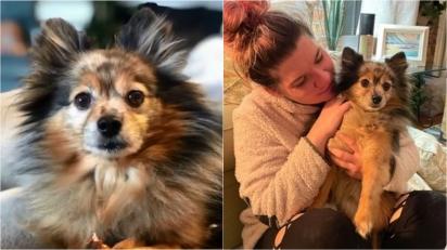 Mulher reencontra seu cachorro Lulu da Pomerânia que fugiu enquanto ela estava de férias. (Foto: Reprodução/My Fox 8)