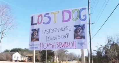 Haley Compton espalhou cartazes pela vizinhança, pedindo ajuda para encontrar o paradeiro do cão. (Foto: Reprodução/My Fox 8)