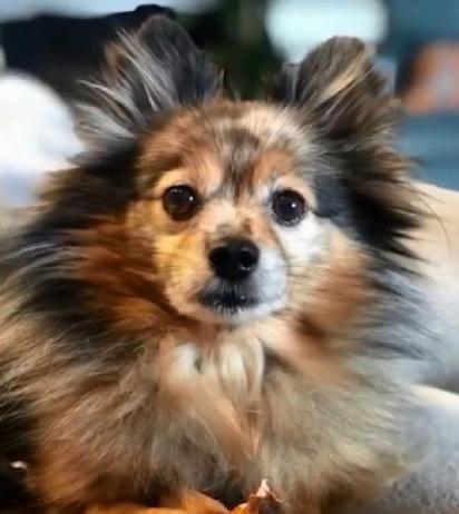 O cachorrinho desapareceu no dia 26 de dezembro. (Foto: Reprodução/My Fox 8)