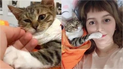 Gatinha que teve uma das patas amputadas agarra mão de veterinária e é adotada pela profissional. (Foto: Instagram/zikrettinn)