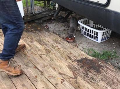 A gatinha passou anos vagando pela fazenda que Máximo trabalha. (Foto: Facebook/Animal Friends Project)