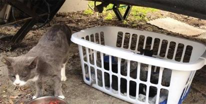 Máximo passou a alimentá-la e depois de várias visitas percebeu que a gatinha estava prenhe. (Foto: Facebook/Animal Friends Project)