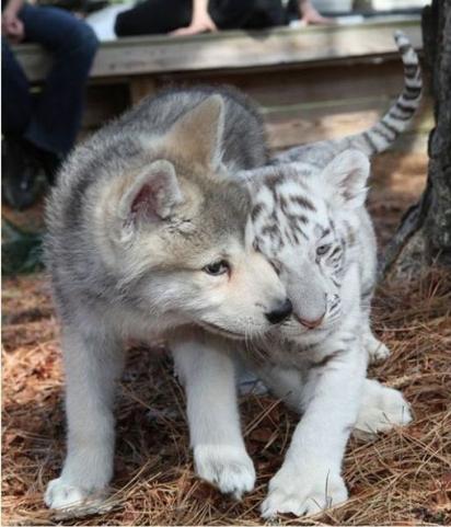 Apostamos que eles pensam que são irmãos de verdade. (Foto: Reprodção/ acidcow.com)