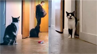 Dono sai para trabalhar e deixa câmera gravando para ver como o seu gato se comporta e se comove com reação do felino. (Foto: Reprodução Youtube/Sho Ko)