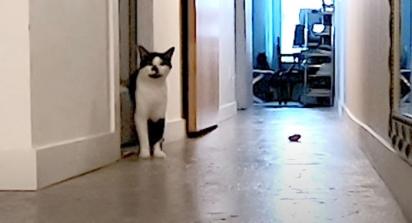 O gatinho fica sentado em frente a porta miando desesperadamente. (Foto: Reprodução Youtube/Sho Ko)