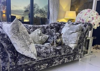 Vinnie, o buldogue francês, por ter o pelo parecido com a estampa, se disfarça no sofá de veludo da sua dona. (Foto: Splitpics UK/Tina Grantham)