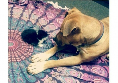 Missy se apegou ao gatinho, cuidando-o como se fosse seu filhote. (Foto: Facebook/Abby Koitka via Dogspotting Society)