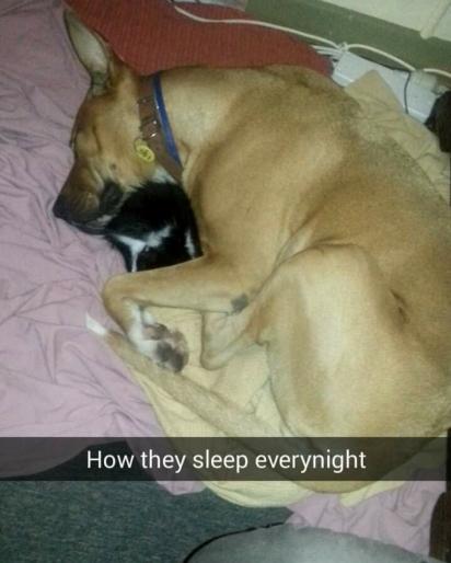 A cadela Missy foi abandonada por seus antigos donos por considerá-la dócil demais. (Foto: Facebook/Abby Koitka via Dogspotting Society)