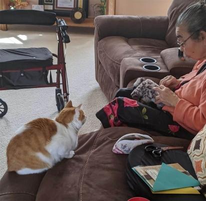 O gato esperou pacientemente que seu brinquedo fosse consertado. (Foto: Arquivo Pessoal/Alana)