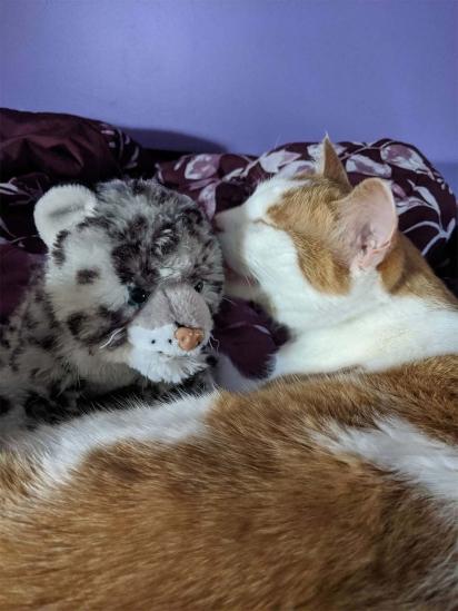 O gatinho adora o seu ursinho de pelúcia. (Foto: Arquivo Pessoal/Alana)