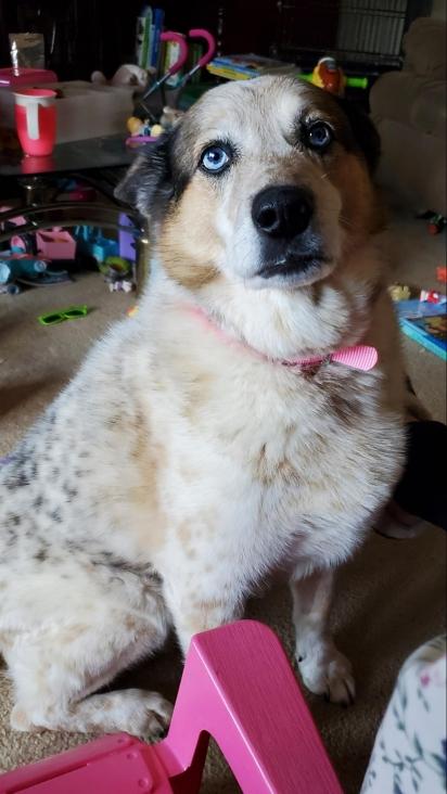 Dana perdeu o pai em dezembro de 2020 e a cadelinha ficou com ela. (Foto: Facebook/Dana Kissing via Dogspotting Society)