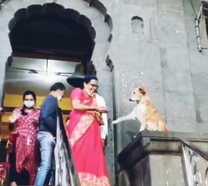 O cachorrinho cumprimenta todos que saem pela porta. (Foto: Reprodução Instagram/smalltobigtails)