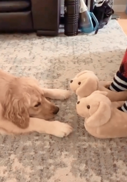 A Golden ficou observando as pantufas tentando descobrir se eram ou não amigos. (Foto: Reprodução Instagram/missgoldenmolly)