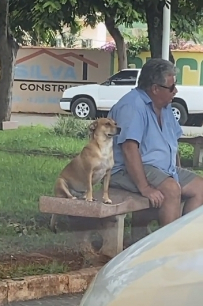 Fazendo cara de paisagem a cadela Mell fica sentada ao lado de desconhecido. (Foto: Reprodução TikTok/@mellzinhadocinho)