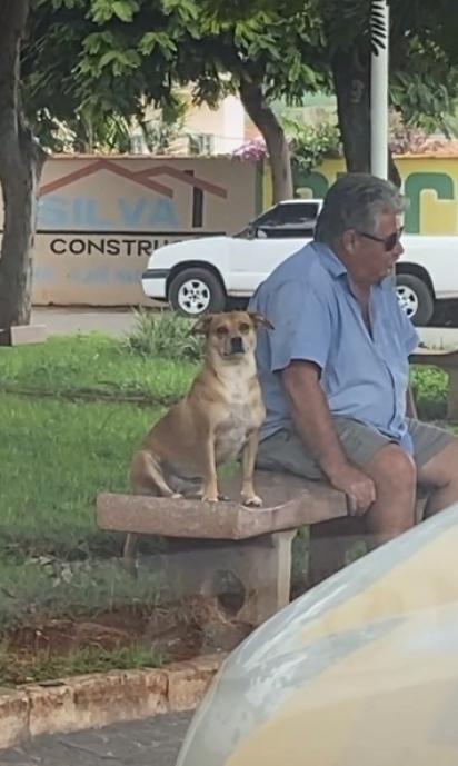 A cadela Mell senta ao lado de desconhecido na praça como se o conhecesse. (Foto: Reprodução TikTok/@mellzinhadocinho)