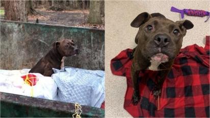 Pit bull que foi encontrada abandonada em lixo é resgatada e tem fila de pessoas interessadas em adotá-la. (Foto: Facebook/Animal Welfare League of Trumbull County)