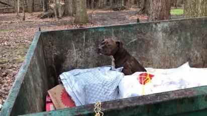 A pit bull foi encontrada em lixeira no início do mês de janeiro em Ohio (EUA). (Foto: Facebook/Animal Welfare League of Trumbull County)