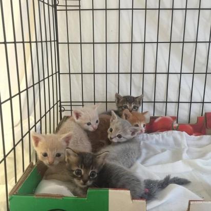 Os voluntários não sabiam que Sassie tinha mais cinco filhotes escondidos. (Foto: Facebook/@VOKRA - Abrigo para animais)