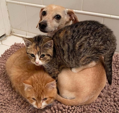 Os gatinhos foram resgatados com 12 semanas de vida. (Foto: Instagram/shibuyarollcall)