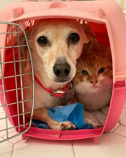 A cadela Kona com o gatinho Chester. (Foto: Instagram/shibuyarollcall)