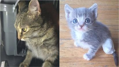 Mamãe felina que foi adotada implora para voltar ao local de resgate e voluntário descobre que os seus filhotes estavam lá. (Foto: Facebook/@VOKRA - Abrigo para animais)