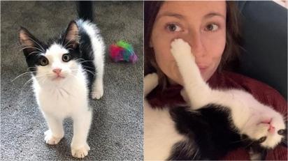 Gatinho abandonado por ser brincalhão demais é adotado por família que o aceita como ele é. (Foto: Instagram/Battersea Dogs and Cats Home)