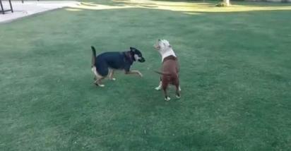 As cachorrinhas Luna e Caipirinha vivem com a família em Sunchales, Argentina. (Foto: Arquivo Pessoal/Julieta Firpo)