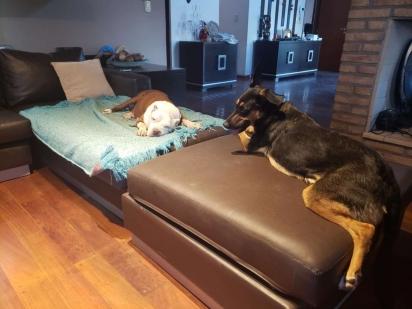 Com as duas cachorrinhas sãs e salvas, Julieta providenciou grades ao redor da piscina para evitar futuros acidentes. (Foto: Arquivo Pessoal/Julieta Firpo)