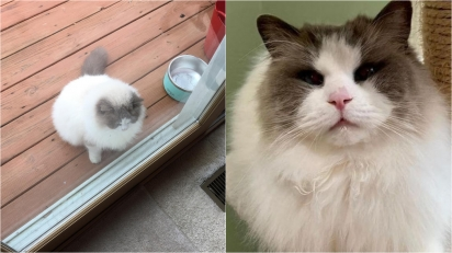 Mulher acolhe gato de forma temporária mas acaba se apaixonando por ele e decide adotá-lo. (Foto: Instagram/fosterkittys)