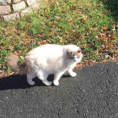 O gatinho foi resgatado das ruas de Virgínia, Estados Unidos, em fevereiro de 2020. (Foto: Instagram/fosterkittys)
