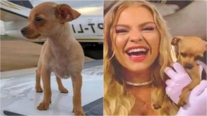 Conheça Gisele Pinscher, a cadelinha da Luisa Sonza e do Whinderson Nunes. (Foto: Foto: Instagram/@whinderssonnunes | Reprodução/TV Globo)