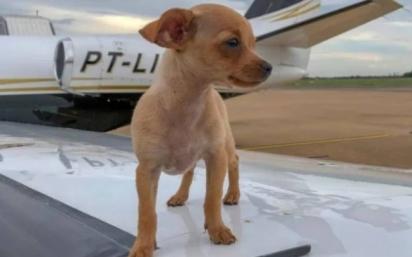 A cachorrinha foi adotada em 2018 e o seu nome é em homenagem a Gisele Bündchen. (Foto: Instagram/@whinderssonnunes)