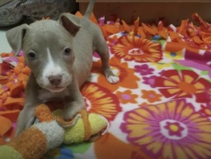 A filhote foi adotada pela médica veterinária que a atendeu. (Foto: Reprodução/The Dodo)