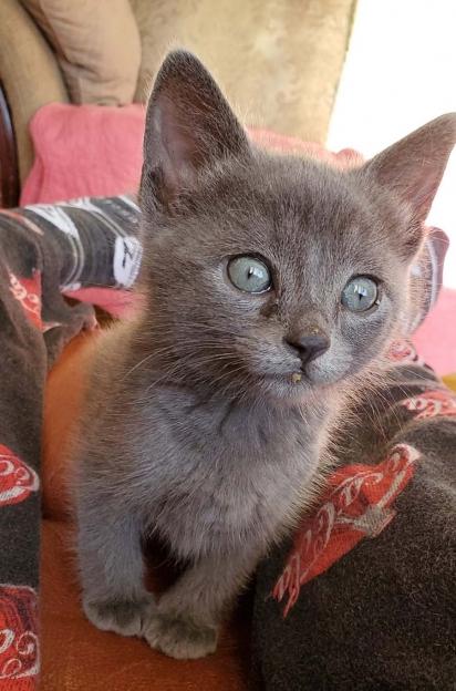 O gatinho precisava de cuidados especiais para poder se recuperar. (Foto: Facebook/Un Chat à la Fois)