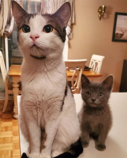 Felix na companhia do seu irmão Trunks. (Foto: Instagram onecatatatime_rescue)
