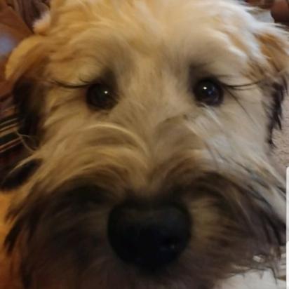 A cadelinha Bella vive com a sua família vive em Kentucky, Estados Unidos. (Foto: Instagram/bellarose3162)