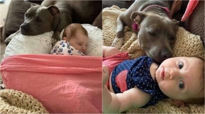 Pit bull super-protetora não sai do lado da bebê dos donos. (Foto: Arquivo Pessoal/Kevin Smith)