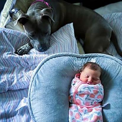 A pit bull sofreu muitos traumas no passado, mas com o amor dos seus pais superou todos eles. (Arquivo Pessoal/Kevin Smith)