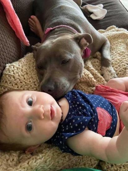 O amor da pit bull pela bebê é lindo e com certeza essa amizade durará para sempre. (Foto: Arquivo Pessoal/Kevin Smith)