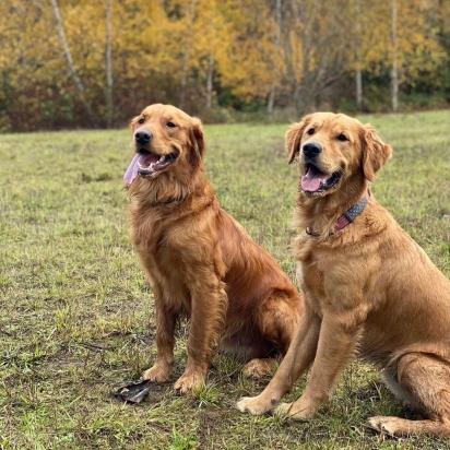 Os irmãos Ace (à direita) e Bo (à esquerda). (Foto: Instagram/vincematteson)