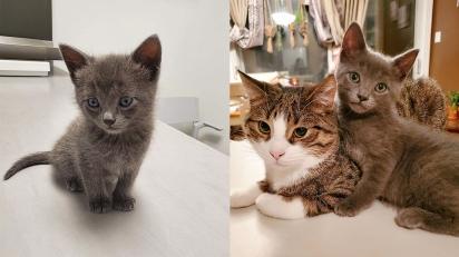 Voluntária acolhe gatinho em sua casa e os seus animais o adotam permanentemente. (Foto: Instagram/meggieslittlezoo)