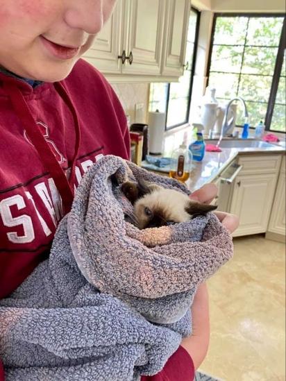 O jeito que a voluntária encontrou para poder pegar a gatinha foi embrulhá-la numa toalha.(Foto: Arquivo Pessoal/Kendal Benken)