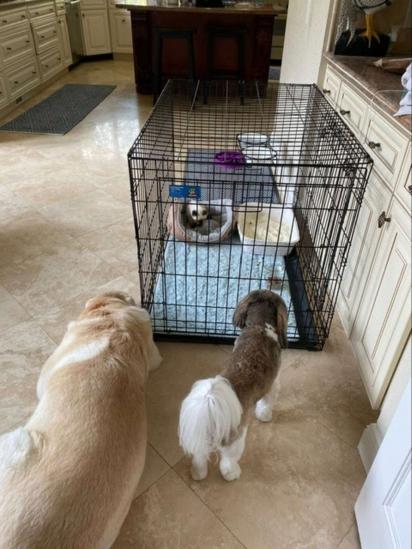 A gatinha foi colocada em uma casinha de cachorro e rapidamente os outros membros da família vieram cumprimentá-la. (Foto: Arquivo Pessoal/Kendal Benken)