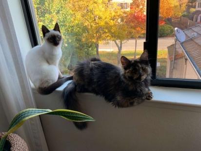 A gatinha Betty e o gatinho Amber. (Foto: Arquivo Pessoal/Roz Westil)