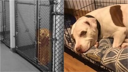Último cachorro a ser adotado em abrigo abre sorriso ao descobrir que terá um lar. (Foto: Facebook/Ionia County Animal Shelter)