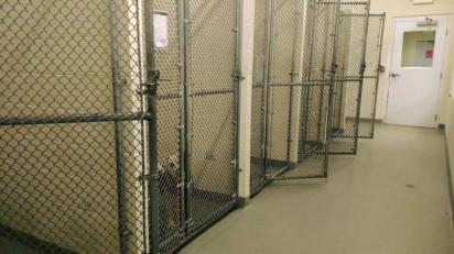 No abrigo todos os cães foram adotados, menos Capone. (Foto: Facebook/Ionia County Animal Shelter)